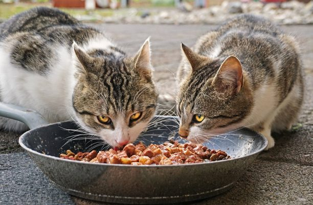 cats-4372525_960_720